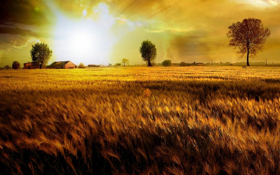 """Какво се има предвид под понятието """"Божие царство""""?"""